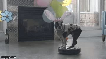 dogs react  vacuum cleaners funny gif