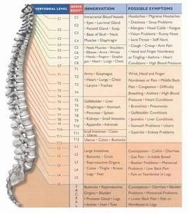 Vertebral Column  U2013 Superior Articular Processes  Inferior