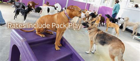 dog kennel dog groomer dog grooming dog boarding  dallas