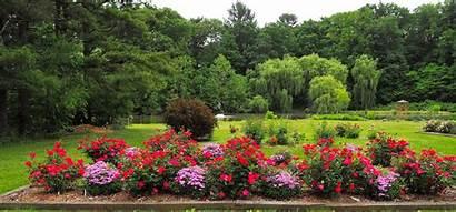 Rose Garden Gardens Friendship Event Botanic Guests