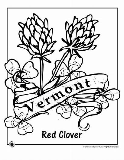 Vermont Coloring State Flower Pages Flag Printable