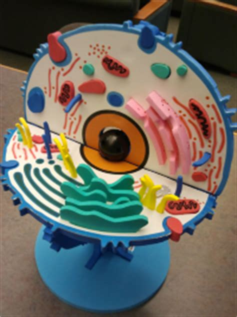 animal cell project ideas  kids