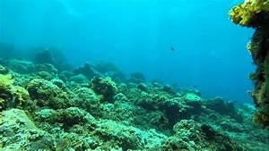 Fondo marino en Canarias YouTube