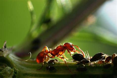 ameisen an pflanzen pflanzenforschung de klein aber oho ameisen helfen bei der regenerierung des regenwaldes