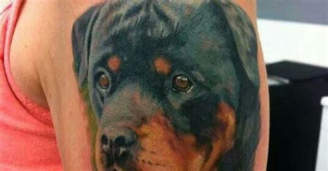 awesome tattoo rottweiler pinterest awesome tattoos