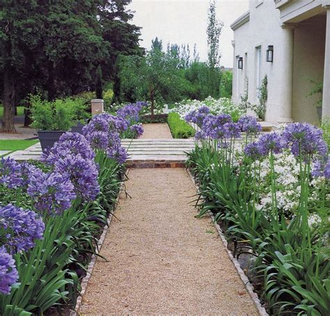 landscaping with agapanthus agapanthus edging knockout landscape pinterest gardens beautiful and search