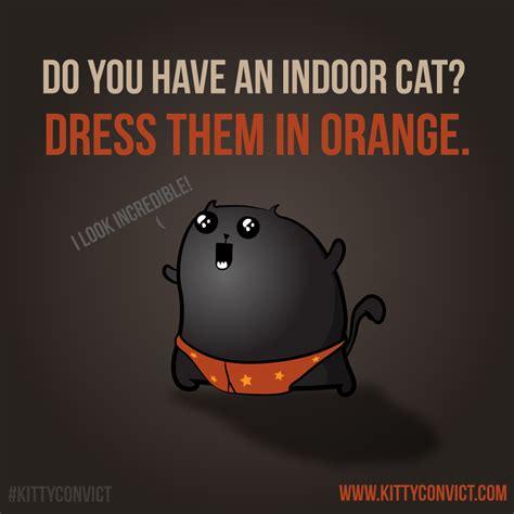 put  orange collar   cat