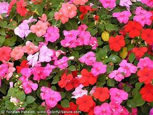 Colorful Nature > Spring, Summer, Fall And Winter Flowers ...