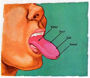 The Taste Bud Map You Learned In School Is Wrong
