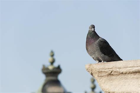 Best Methods Of Pest Control For Birds