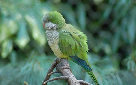 quaker parrot   fun