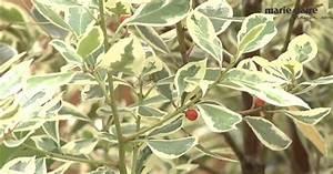 Quels Arbustes Pour Une Haie : quels arbustes choisir pour une terrasse marie claire ~ Premium-room.com Idées de Décoration