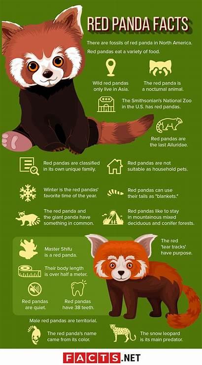 Facts Panda Pandas Infographics