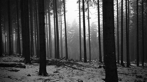 black  white landscapes trees forest monochrome
