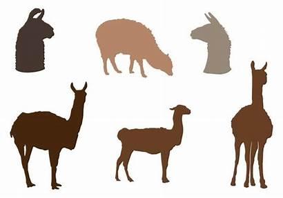 Alpaca Silhouette Vector Pack Vecteezy