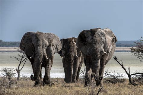 Exploring Namibia - Etosha National Park - Photography Life