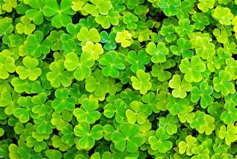 plant pictures plant free stock photo public domain pictures