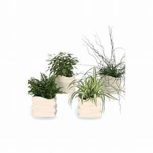 Cache Pot Plante : plante verte avec cache pot plantes et fleurs d 39 int rieur nos produits botanic ~ Teatrodelosmanantiales.com Idées de Décoration