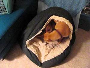 how to get comfy in the cave bed youtube With pit stop dog bed