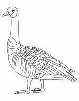 Goose Coloring Canada Goosebumps Drawing Slappy Geese Barren Clipart Canadian Printable Getcolorings Popular Getdrawings Library Coloringhome Ostrich sketch template
