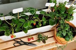 Gemüse Auf Dem Balkon : tipps obst und gem se auf dem balkon anzubauen wohnungs ~ Lizthompson.info Haus und Dekorationen