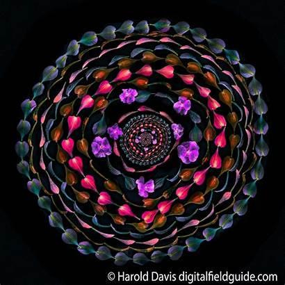 Davis Harold Photoshop Flower Creative Lab Petals