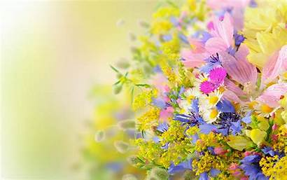 Flowers Summer Nature Many Flower Spring Advertisement