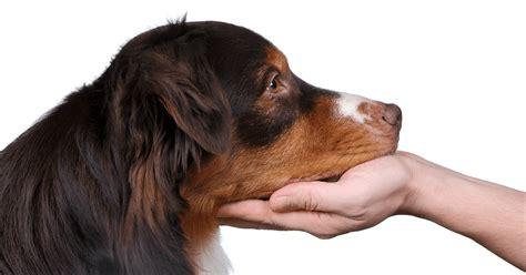 animal trainer certification program fear  pets