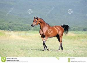 Running Arabian Horses | Wallpapers Gallery