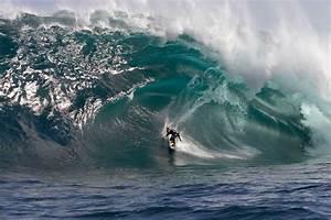 Hawaii Surfing, Dangerous Waves   Animal Photo  Wave