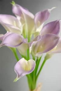 touch mini lilac calla bouquet 12 flowers