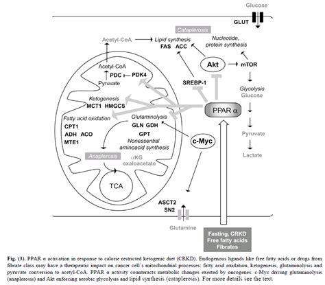 epiphany ppara peroxisome proliferator activated