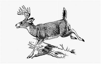 Burning Stencils Wood Deer Drawing Jumping Coloring