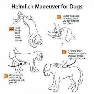 how to save a choking dog