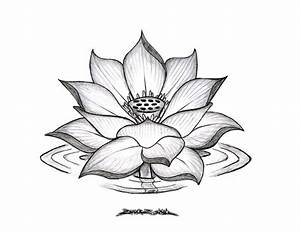 Lotus Flower Pencil Drawing Lotus Flower Drawings For ...
