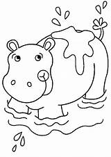 Hippo Coloring Pages Coloringpages1001 sketch template