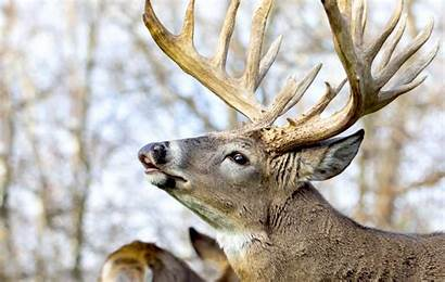 Camo Deer Realtree Hunting Care