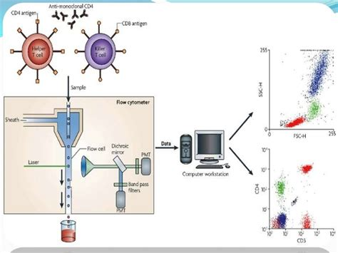 Flow Cytometry. Technical Colleges In Ga Santa Ana Electrician. Credit Card Machine Sales Medicare What Is It. Medicare Part B Penalty Ford Dealer Batavia Ny. Td Ameritrade Aba Routing Number. Good First Time Credit Cards. Hospital Market Research Bill Britt Used Cars. Internships For Environmental Studies Majors. Video Surveillance Camera Stop Animation App