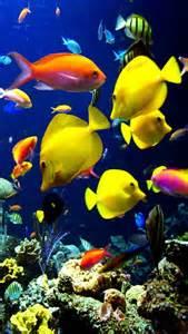 fond d cran iphone 5 aquarium 07 640x1136 gratuit