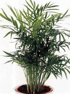 Plante Pour Appartement : le beau jardin des astuces pour bien conserver et soigner ~ Zukunftsfamilie.com Idées de Décoration