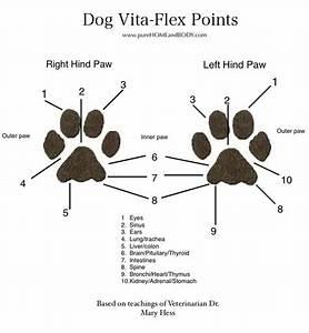 Dog Trigger Point