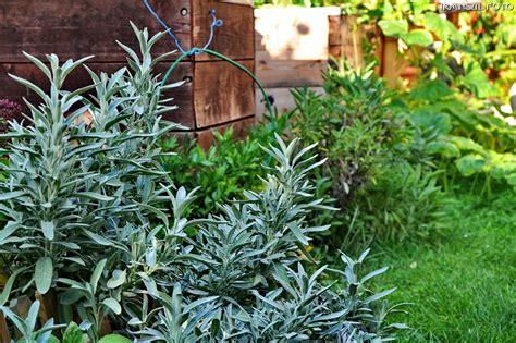 Pilze Im Garten Pflanzen by Pilze Im Garten Bilder Pilze Im Garten Foto Bild Pflanzen