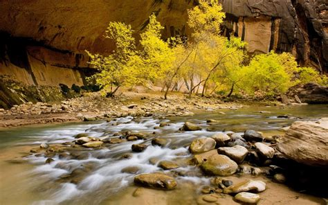 nature river riverbed stones rocks willow  green