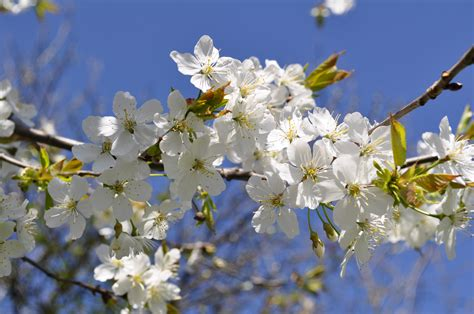 8 Spring Time Activities To Improve Your Health Micvinny