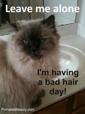Bad Hair Day Meme - bad hair day cat www pixshark com images galleries with a bite