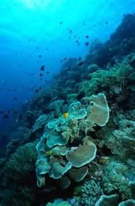 Underwater Coral Reef