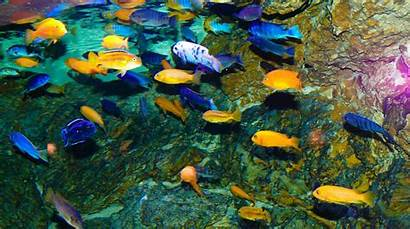 Wallpapers Fishes Adorable Tropical African Undefined Cichlids
