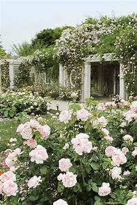 Backyard, Landscaping, Ideas, For, Your, Dallas, Backyard