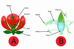 Question Examples Of Which Flower Gets Pollinated By What