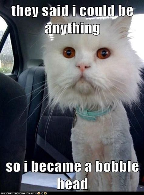 They Said I Could Be Anything Meme - funny cat pictures they said i could be anything so i became a bobble head lol s pinterest